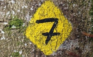 Målsättning i sju steg – Målinriktning